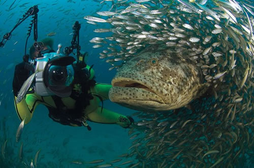 photographer-goliath-grouper.jpg